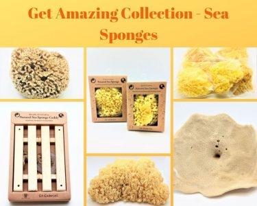 Sponges Direct Inc