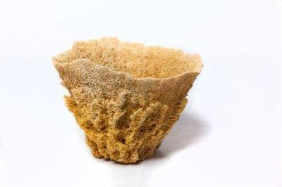 Wire Vase Sponges